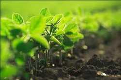 Mercado de pruebas de productos biológicos agrícolas