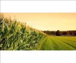 Seguro de cultivos agrícolas Mercado